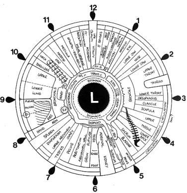 Iridology Left Eye Chart - Dr Akilah El