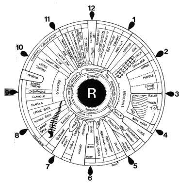 Iridology Right Eye Chart - Dr Akilah El